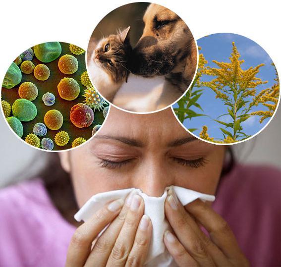 нлп близняков лечение аллергии